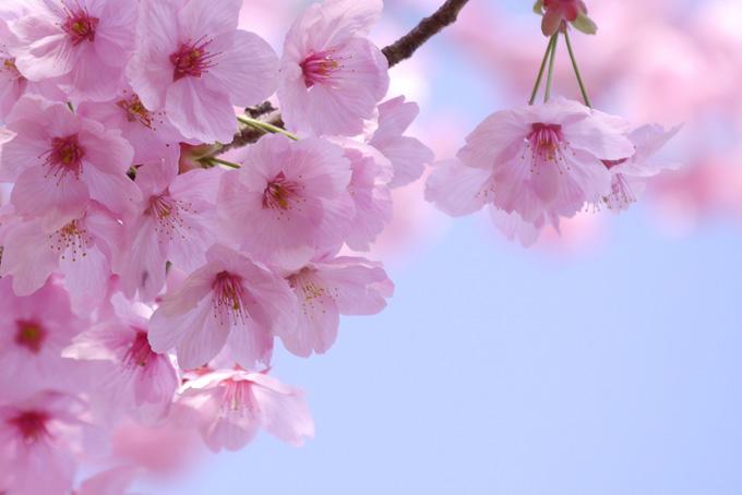 【春の歌】春に聴きたいスプリングソングのまとめ